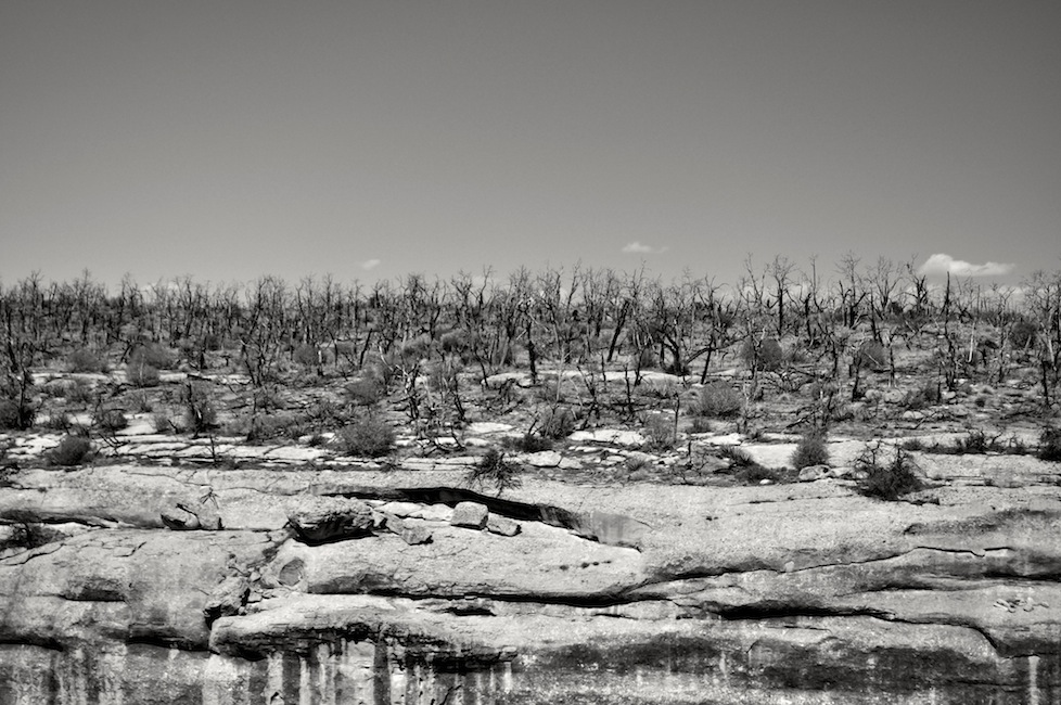 There have been so many forest fires in the last 10 years that the mesa tops will stay bare for 200-300 years