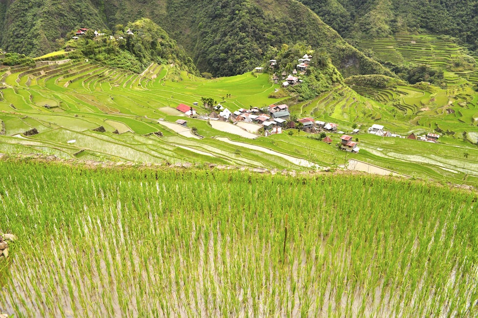 Walking through the rice terraces in Batad