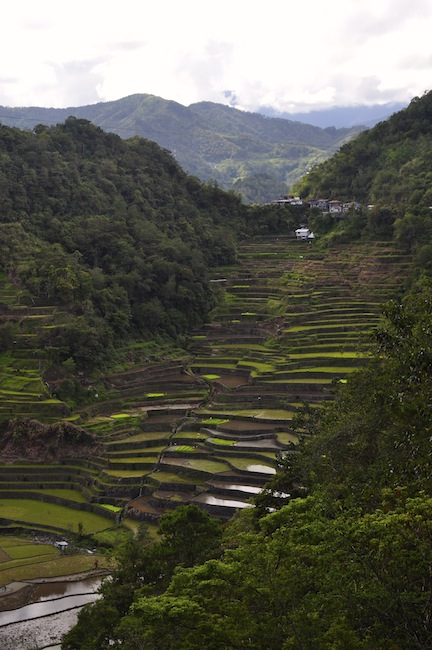 Terraces on the way back to Banaue