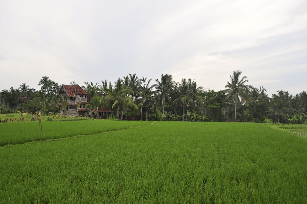 Walking behind our guesthouse in Ubud, Bali