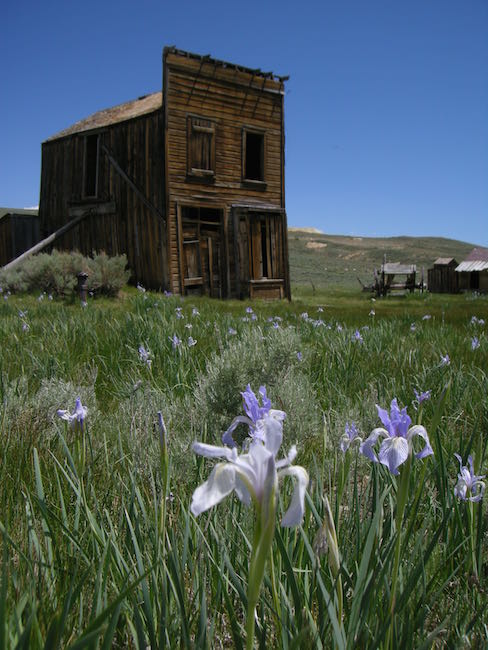 Flowers Bodie California